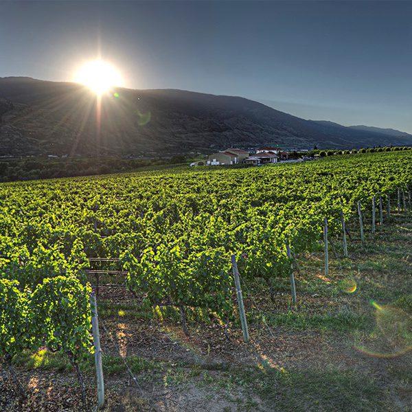 Desert Hills Winery