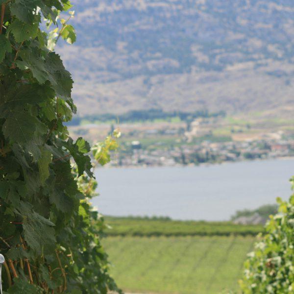 OOWA Wineries - Coming Soon
