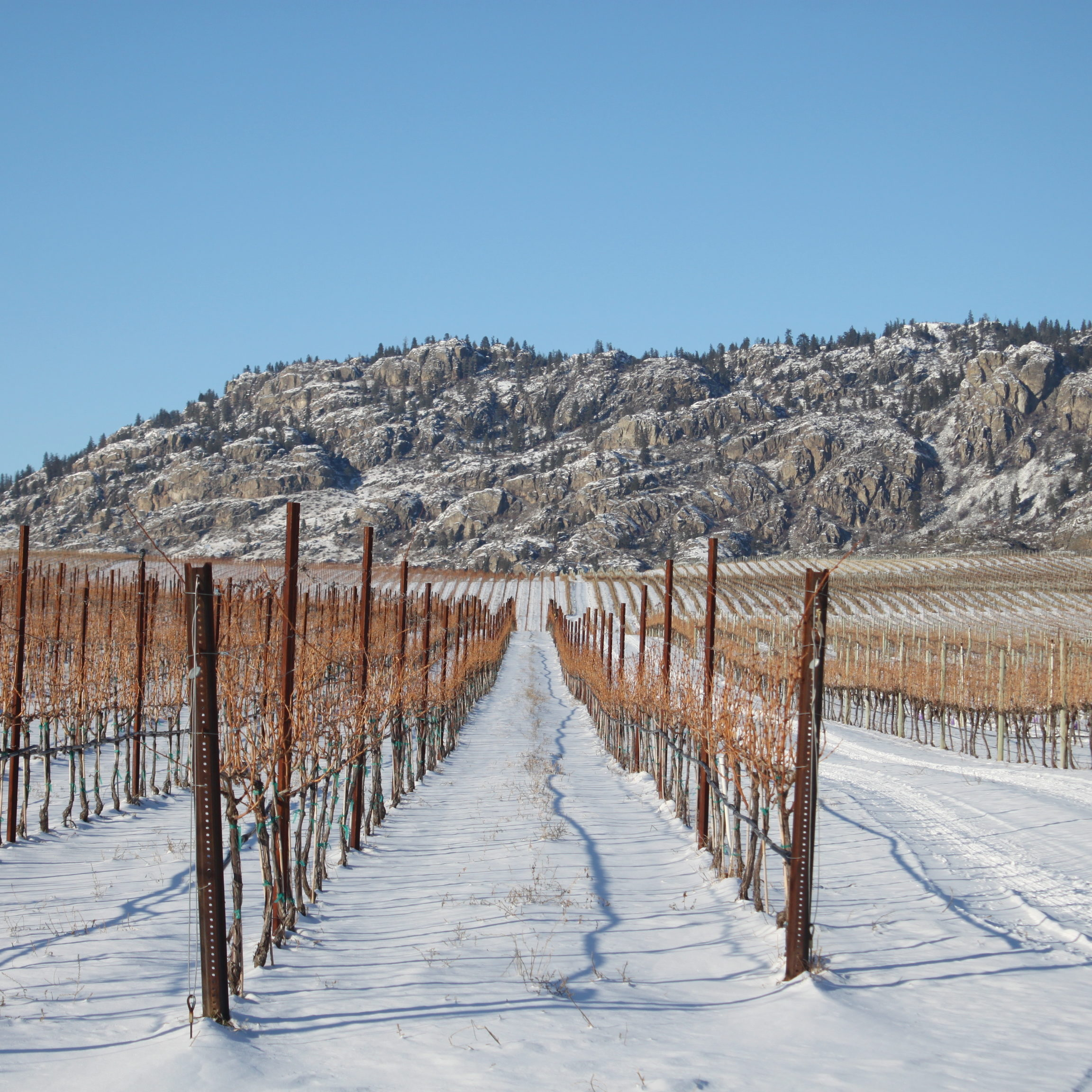 OOWA winter_credit Oliver Osoyoos Wine Country12