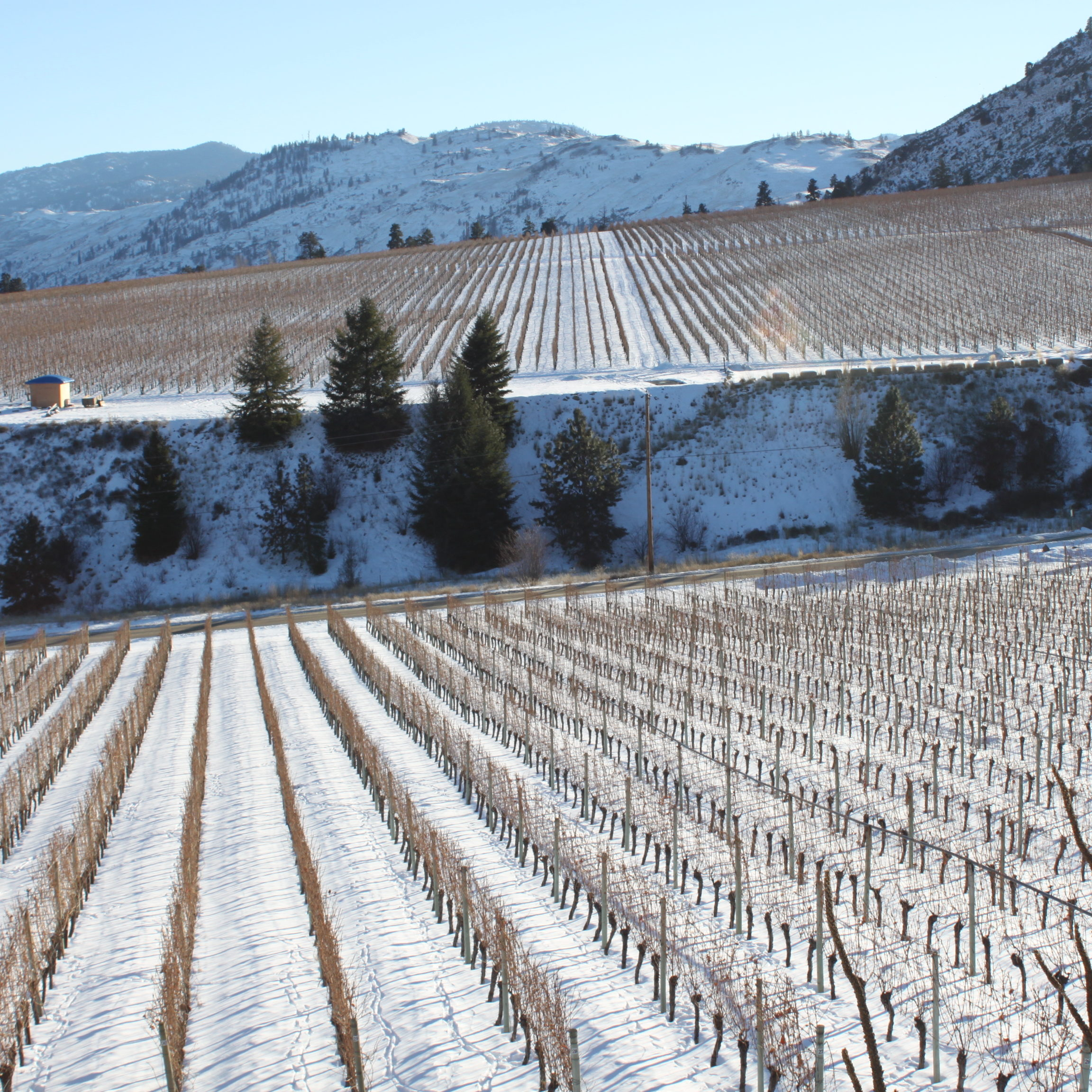 OOWA winter_credit Oliver Osoyoos Wine Country24 (1)
